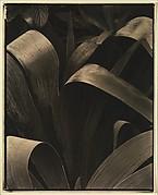 Garden Iris—Georgetown, Maine