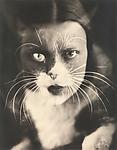 Io + gatto