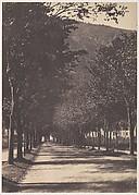 [Allée of Trees, Pau]
