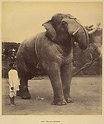 The Great Elephant