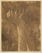 Dana's Hands and Grasses, Long Island, New York