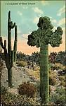 [124 Postcards of Landscapes Collected by Walker Evans]
