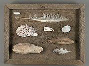 [Assemblage on Wood Base with Driftwood, Feathers, Stones, and Shells]