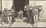 [Seated Man in Bar Doorway with Two Burros, Spain]