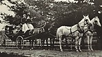 [Copy Photograph of Carriage Drawn by Four Horses]