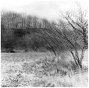 [Blurred View of Bare Trees in Field]