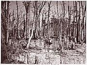 Swamp near Broadway Landing, Appomattox River