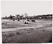 [Herd of Horses].  Brady album, p. 123