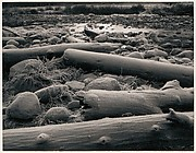 Logs, Rocks, Frost, Yosemite Valley, California