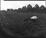 [Hog and Cotton Bale, Hale County, Alabama]