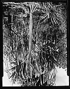 [South Seas: Man Seated at Base of Tree]