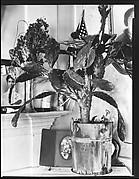 [Interior Detail of Cactus Plant and Family Photographs in De Luze House, Truro, Massachusetts]