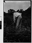 [Walker Evans in Field with Hoe, Darien, Connecticut]