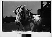 [Horse-Drawn Cart and Driver, Old Wallabout Market, Brooklyn, New York?]