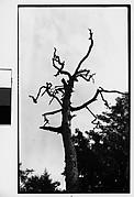 [Dead Tree]