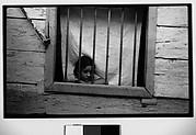 [Girl Behind Barred Window, Havana]