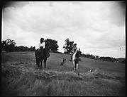 [Unidentified Horseback Riders]