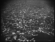 [View from Plane, Southeastern U.S.]