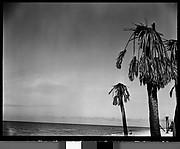 [Palm Trees, Florida]