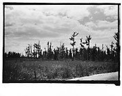 [Cypress Trees, From Moving Automobile, New Orleans Vicinity, Louisiana]