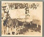 [Unidentified Boy with Pony]