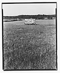 "[""Nehi"" Billboard in a Field]"