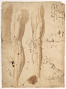 Studies of the Leg of a Man and a Horse&#39;s Head