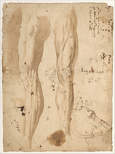 Studies of the Leg of a Man and a Horse's Head