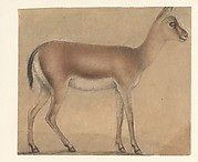 A Gazelle in Profile, Moving Toward the Right