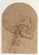 Skull in Profile