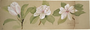 Studies of Magnolias, Tiffany & Co. (1837–present), Graphite, watercolor, and ink on brown wove paper, American