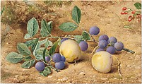 Plums, John William Hill (American (born England), London 1812–1879 West Nyack, New York), Watercolor, graphite, and gouache on off-white Bristol board, American