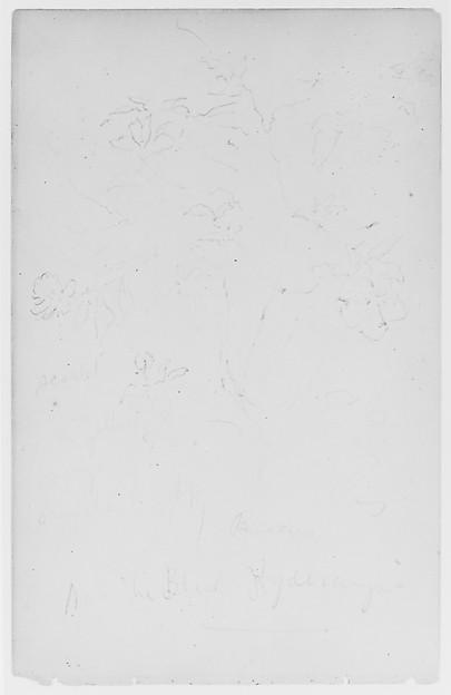 Flowers (from Sketchbook), Thomas Moran (American (born England), Bolton, Lancashire 1837–1926 Santa Barbara, California), Graphite on paper, American
