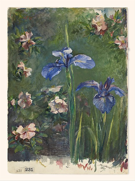 Wild Roses and Irises, John La Farge (American, New York 1835–1910 Providence, Rhode Island), Gouache and watercolor on white wove paper, American