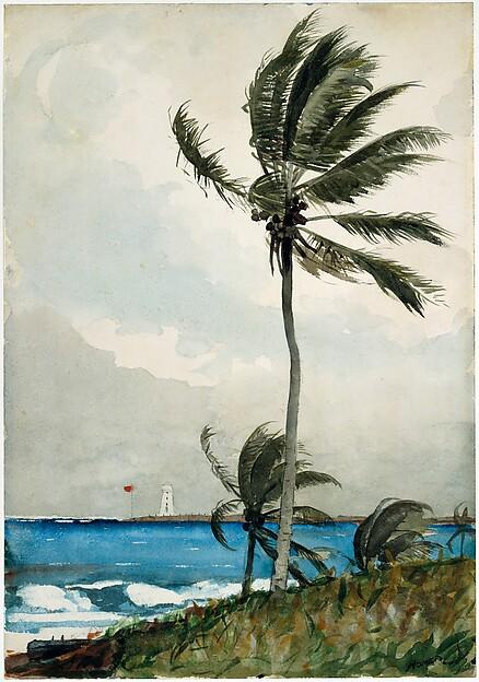 Palm Tree, Nassau, Winslow Homer (American, Boston, Massachusetts 1836–1910 Prouts Neck, Maine), Watercolor and graphite on off-white wove paper, American