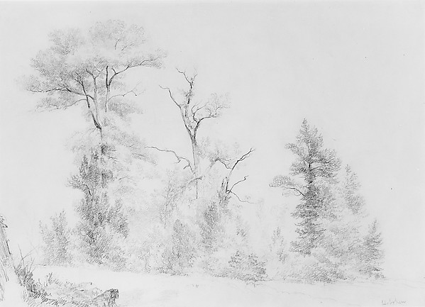 Three Trees, Hoboken, Asher Brown Durand (American, Jefferson, New Jersey 1796–1886 Maplewood, New Jersey), Graphite on yellowish buff-colored wove paper, American