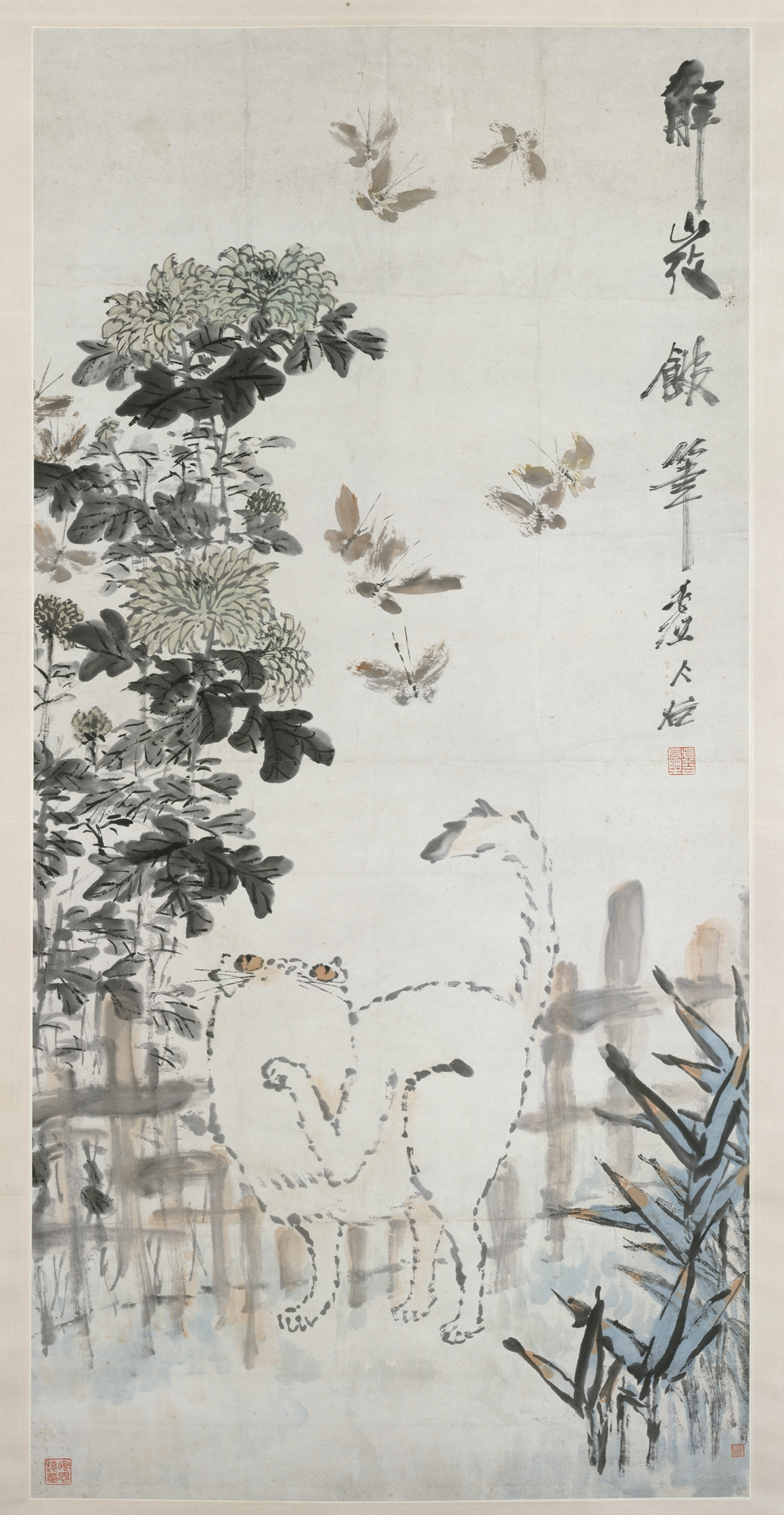 Qing Xu valley - portrait of butterflies and cat.