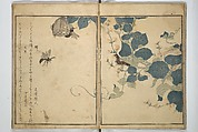 Picture Book of Selected Insects (The Insect Book) (Ehon mushi erami), Kitagawa Utamaro (Japanese, ca. 1754–1806), Set of two woodblock printed books; ink, color, and mica (vol. 2) on paper, Japan