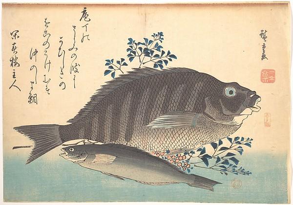Shimadai and Ainame Fish, from the series Uozukushi (Every Variety of Fish), Utagawa Hiroshige (Japanese, Tokyo (Edo) 1797–1858 Tokyo (Edo)), Polychrome woodblock print; ink and color on paper, Japan