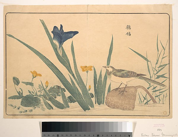 The Pied Wagtail, Kuwagata Keisai (Japanese, 1764–1824), Polychrome woodblock print; ink and color on paper, Japan