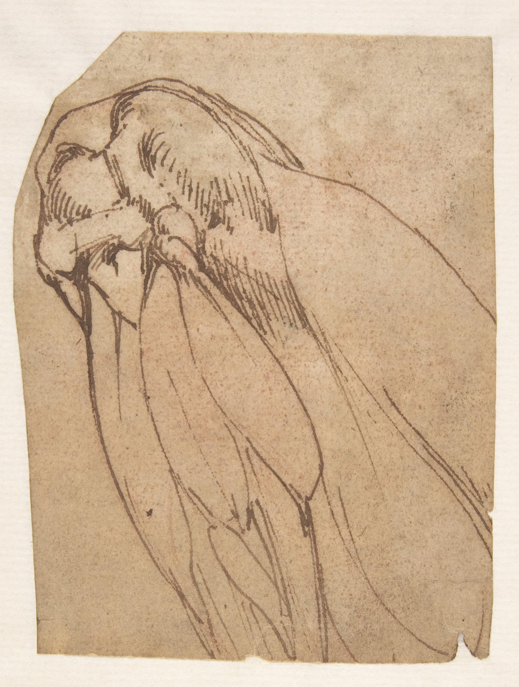 School of Michelangelo Buonarroti | Anatomical Study of a Knee | The Met