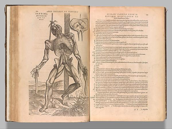 De humani corporis fabrica (Of the Structure of the Human Body), Andreas Vesalius (Flemish, Brussels 1514–1564 Zakynthos, Greece), Woodcut