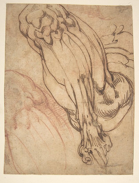 Anatomical Studies of a Leg (recto); Study of a Leg (verso), School of Michelangelo Buonarroti (Italian, Caprese 1475–1564 Rome), Pen and brown ink, and red chalk (recto); pen and brown ink (verso)