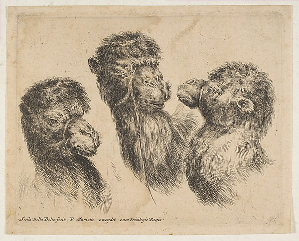 Three Camel Heads, Etched by Stefano della Bella (Italian, Florence 1610–1664 Florence), Etching, state ii or iii