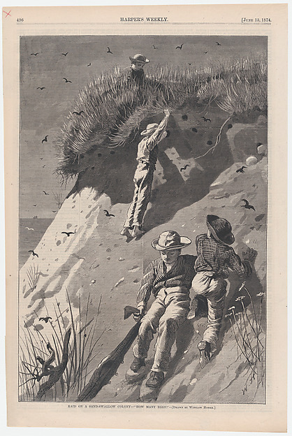 """Raid on a Sand-swallow Colony – """"How Many Eggs?"""" – Drawn by Winslow Homer (Harper's Weekly, Vol. XVIII), After Winslow Homer (American, Boston, Massachusetts 1836–1910 Prouts Neck, Maine), Wood engraving"""