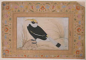 """""""Great Hornbill"""", Folio from the Shah Jahan Album, Painting by Mansur (active ca. 1589–1626), Ink, opaque watercolor, and gold on paper"""