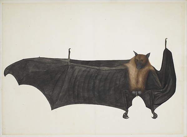 Great Indian Fruit Bat, Painting attributed to Bhawani Das or a follower, Pencil, ink, and opaque watercolor on paper