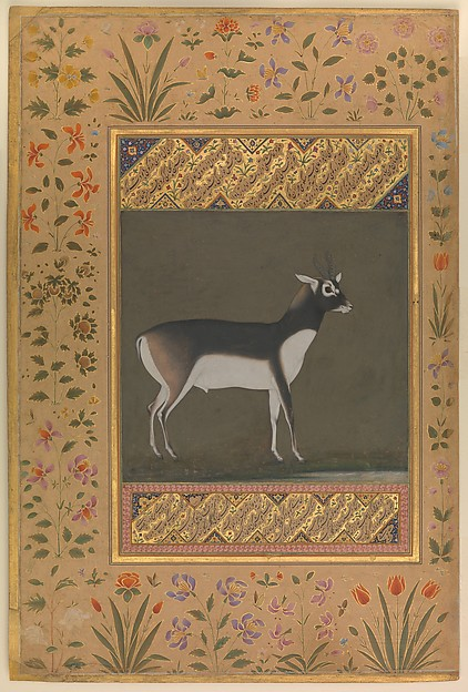 """""""Black Buck"""", Folio from the Shah Jahan Album, Painting attributed to Manohar (active ca. 1582–1624), Ink, opaque watercolor, and gold on paper"""