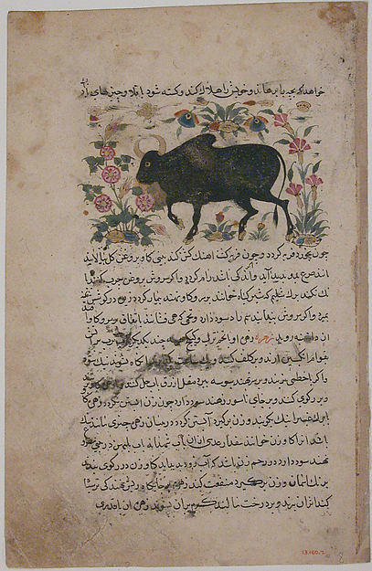 """A Bull"", Folio from a Dispersed Nuzhatnama-i 'Ala'i of Shahmardan ibn Abi'l Khayr, Shamardan ibn Abi 'l Khayr (active 11th century), Ink, opaque watercolor, and gold on paper"
