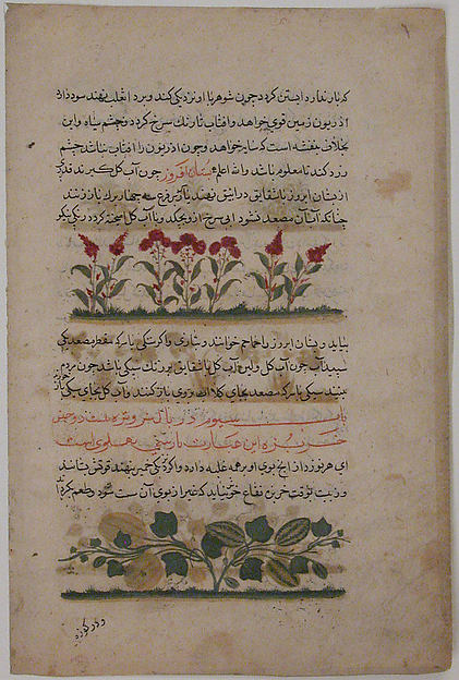 """""""Purple Amaranth and Watermelon"""", Folio from a Dispersed Nuzhatnama-i 'Ala'i of Shahmardan ibn Abi'l Khayr, Shamardan ibn Abi 'l Khayr (active 11th century), Ink, opaque watercolor, and gold on paper"""